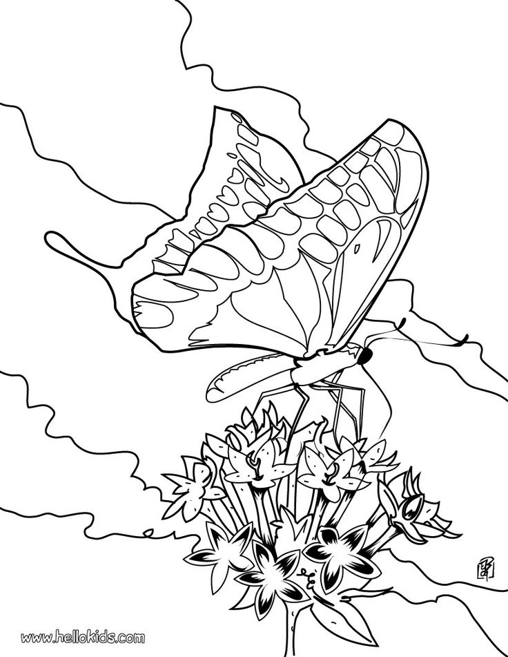 find this pin and more on birds and butterflies coloring pages