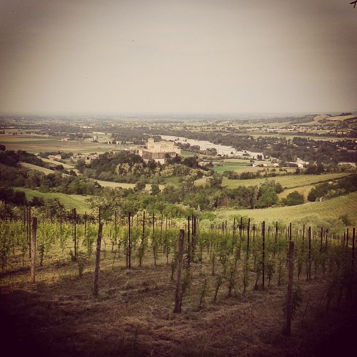 Vista panoramica dei vigneti e del castello di Torrechiara