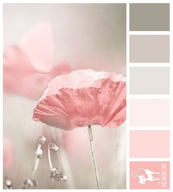 Delicate Poppy  - grey, pink, pastel, rose Designcat Colour Inspiration Board