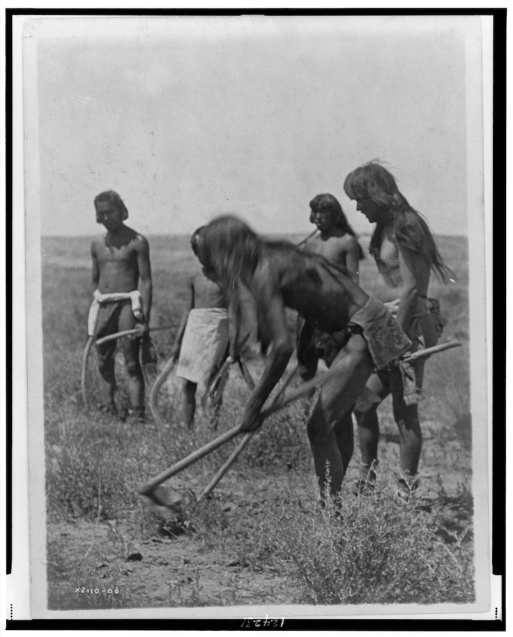 Group of Hopi Indians using hoes to dig out snakes. - Curtis - 1907