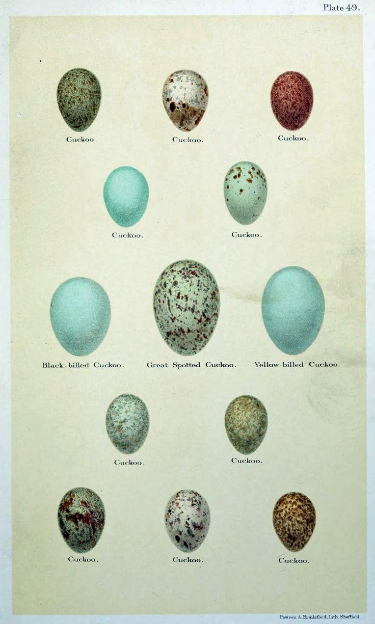 Different Types of Bird Eggs Egg Freebies Vintage