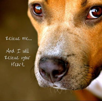 17 Best images about Shelter Dogs quotes on Pinterest ...