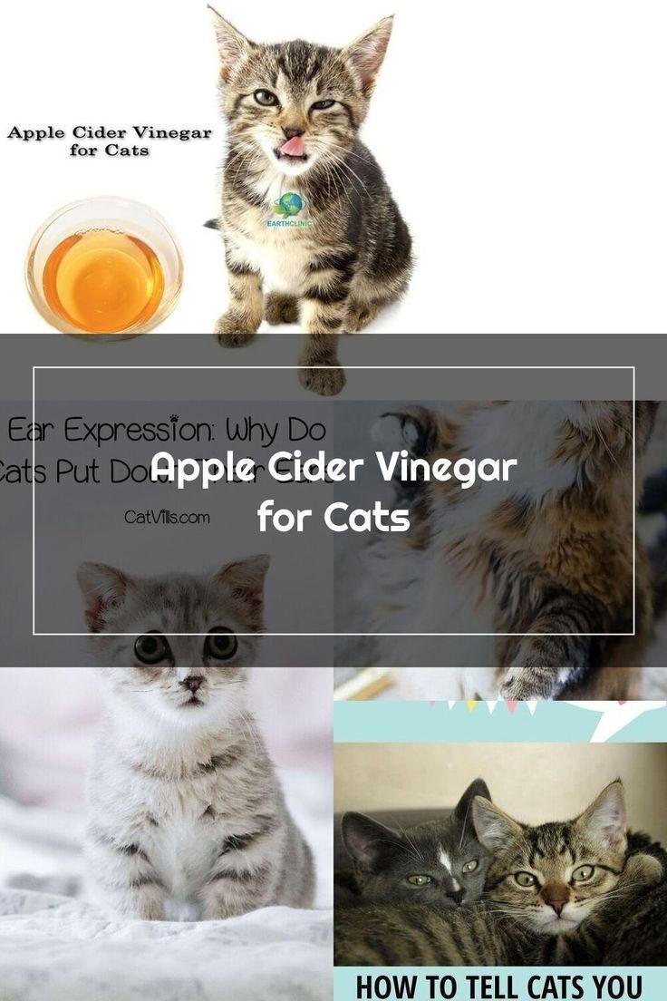 Apple cider vinegar for cats apple cider vinegar is a