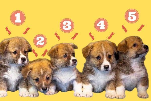人気犬用バギーおすすめ12選 小型犬から大型犬まで 目的別 Inunavi いぬなび 大型犬 ペット イベント 犬