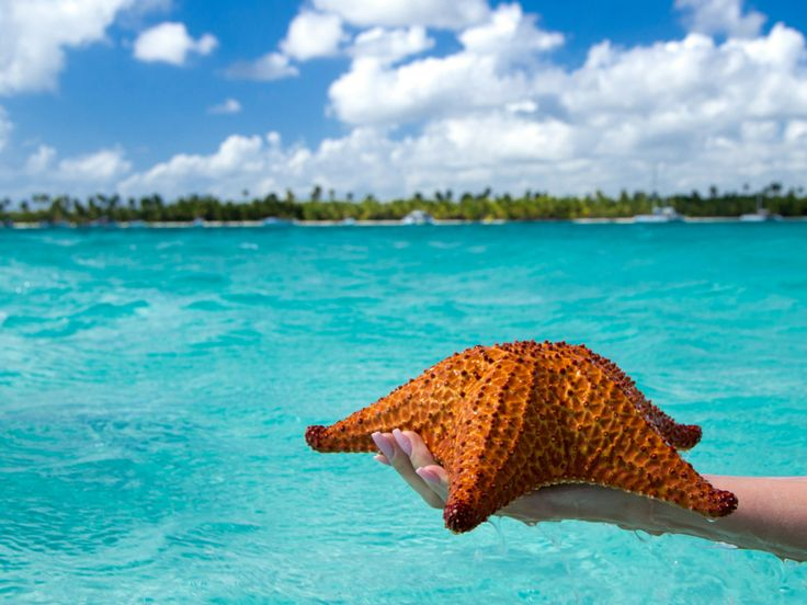 Starfish at Saona Island. Day trip from Now Larimar Punta Cana