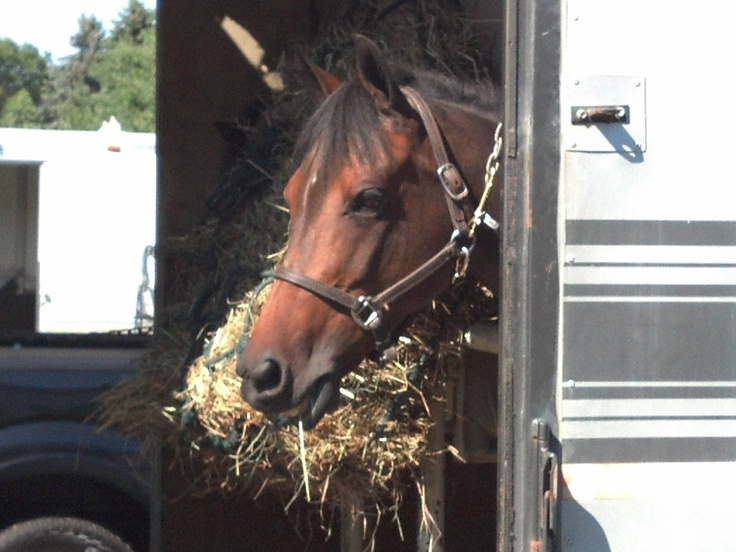 Ponies in the trailer can be tricky, but JD's a pacifist