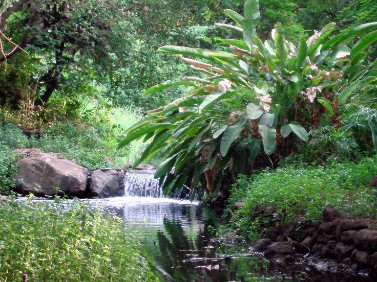 India, Pune, Osho Garden