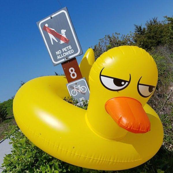 Farniente et style  Bouée originale et drôle  Le classique revisité    ️ #duck #canard #beach #plage #playa #bouee #summer #ummertime