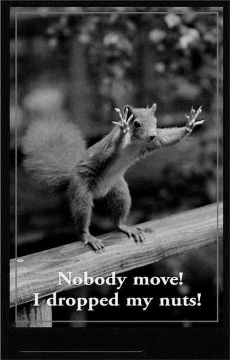 """Unfortunately, when trying to impress my girlfriends at the party with this joke, I screamed (on behalf of the squirrel): """"Nobody move! Ive dropped my balls!"""" The whole restaurant was laughing...Tasty Recipe, Laugh, Squirrels, Writing Prompts Pictures, Nut, Funny Stuff, Humor, Pictures Writing Prompts, Funny Animal"""