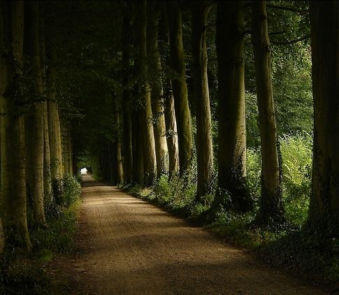 An estate in Wezep, Holland.: Favorite Places, Paths, Nature, Beautiful, Trees, Tree Tunnel, Space, Photo, Roads