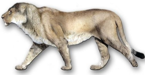 LOS 10 ANIMALES EXTINTOS MÁS SORPRENDENTES DE LA HISTORIA: Extinct Animal, Panthera Leo, 10 Animal, American Lion, Prehistoric Mammals, Animal Extinto, Average Weights, Animal Species, Leo Atrox