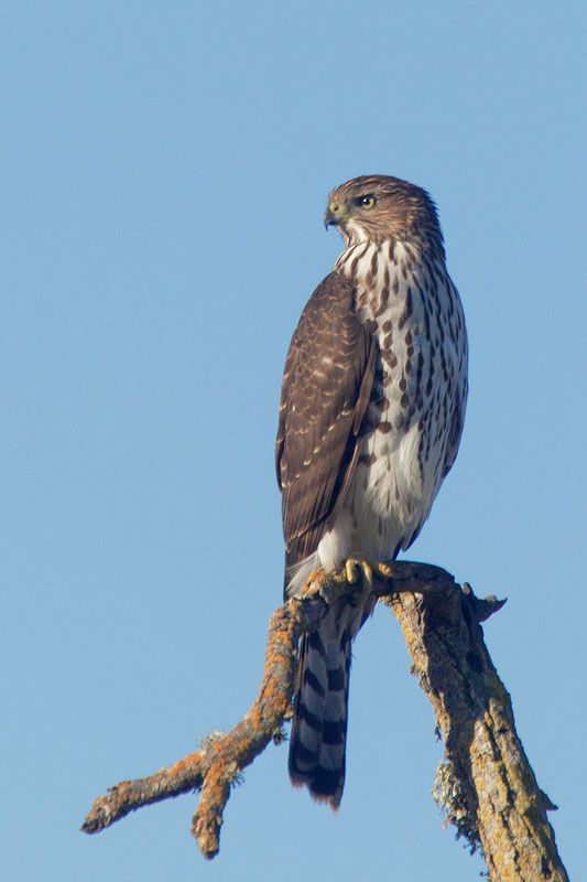 17 best Indiana Birds images on Pinterest | Beautiful ...