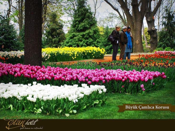 Lale festivali kapsamında Büyük Çamlıca Korusu'na 18 farklı türde toplam 500.000 lale dikildi :)  #elanhotelistanbul #istanbul #tulip #lale #buyukcamlica #Turkey #Turkiye