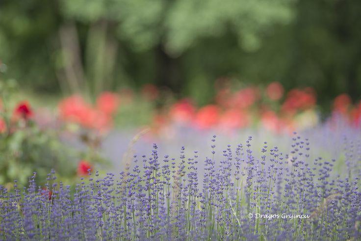 Landscape with flowers in Botanik Garden