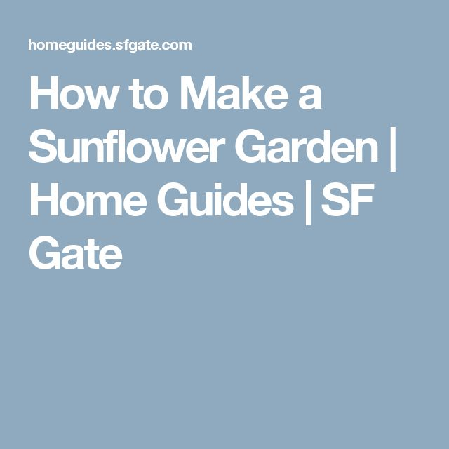 How to Make a Sunflower Garden | Home Guides | SF Gate