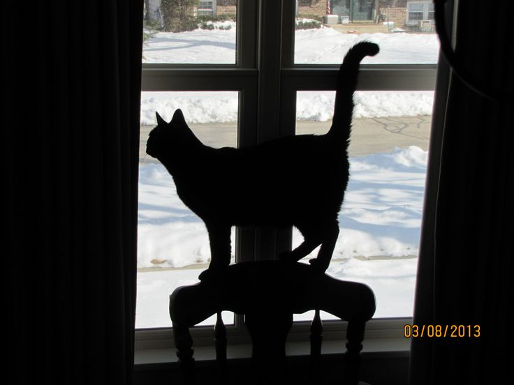 Balancing on the back of a chair, Neko casts a Halloween like silhouette as he looks out of our window...