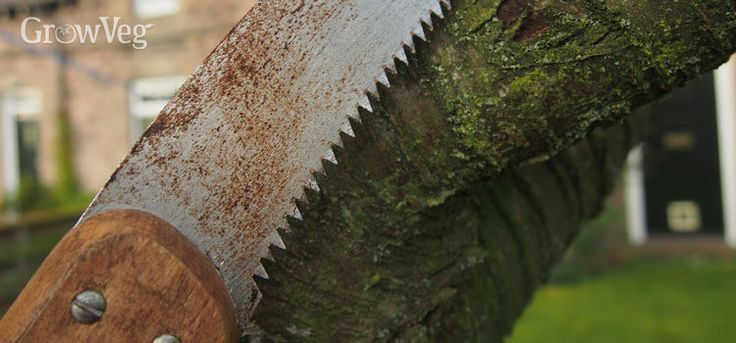 3 Essential Pruning Tools Every Fruit Gardener Needs...Winter means pruning time for many fruit trees and bushes. It pays to have the right tool for each stage of the job. Over time I've whittled down my pruning collection to three types of tool, which no fruit gardener should be without...great new article out today from growveg.com