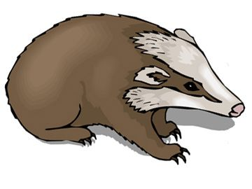 Badgers are rugged, persistent creatures and know how to: a) get what they want, and b) survive. They will fill these very basic needs with remarkable ferocity too, if need be. Do you feel like you need to defend yourself or your territory at all costs? Are you looking for a symbol of tenacity, endurance and vicious fortitude? The badger might be a great totem tattoo to convey your own ability to obtain your desires through rigorous determination.    Badgers are incredibly intelligent too…