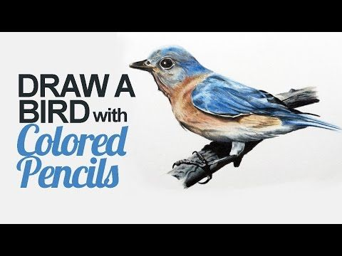 How to Draw a Bird with Colored Pencils - YouTube