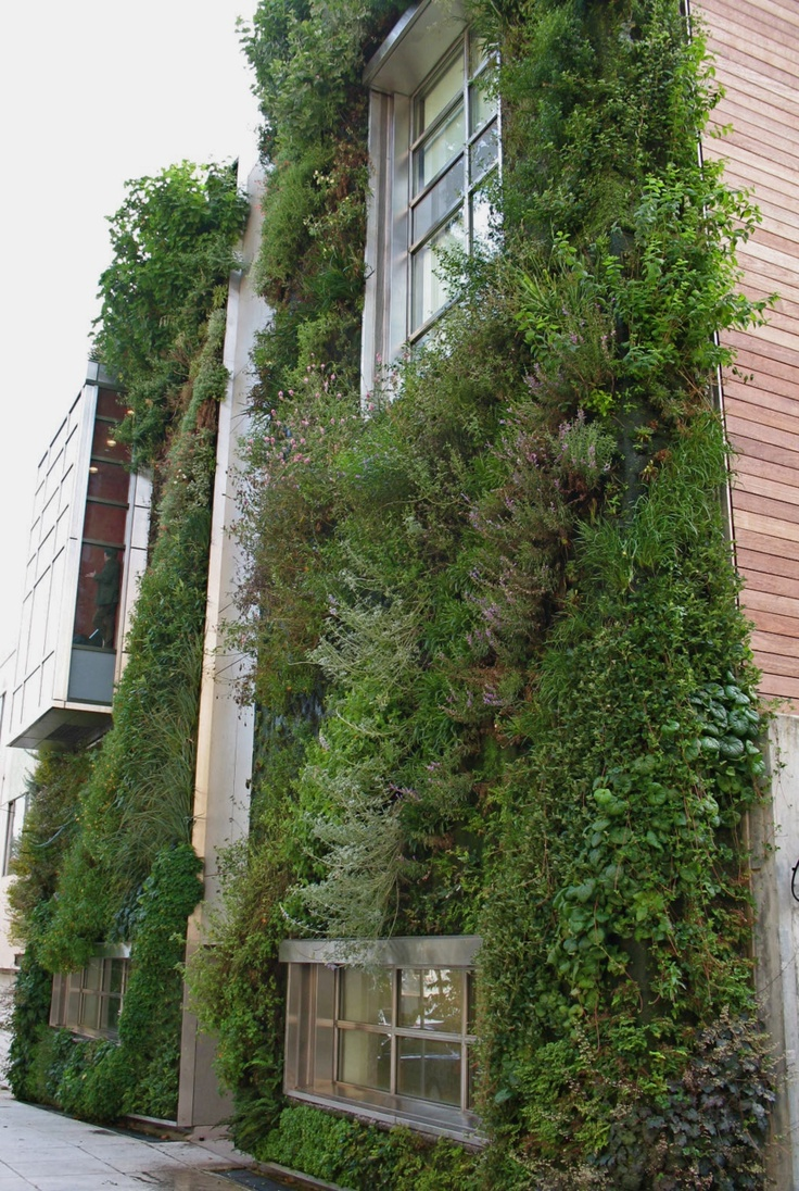 851 Best Images About Green Walls / Vertical Gardening