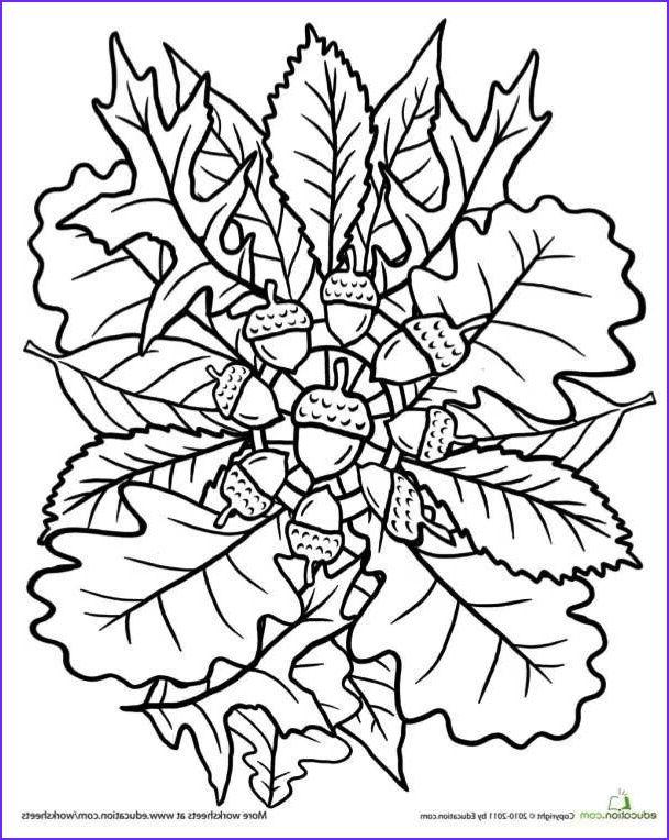 oak tree coloring page mandala  herbst ausmalvorlagen