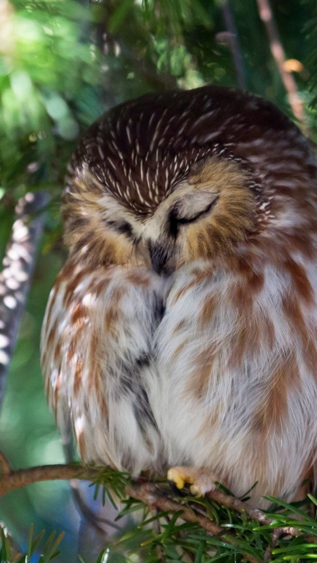 Sleepy owl                                                                                                                                                      More