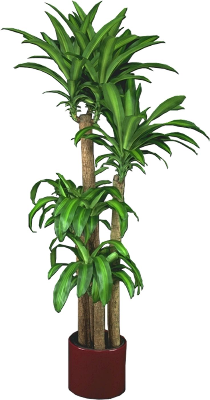 Caring For Tropical Plants Part - 21: Low Light Plants, Indoor Plants U0026 House Plants