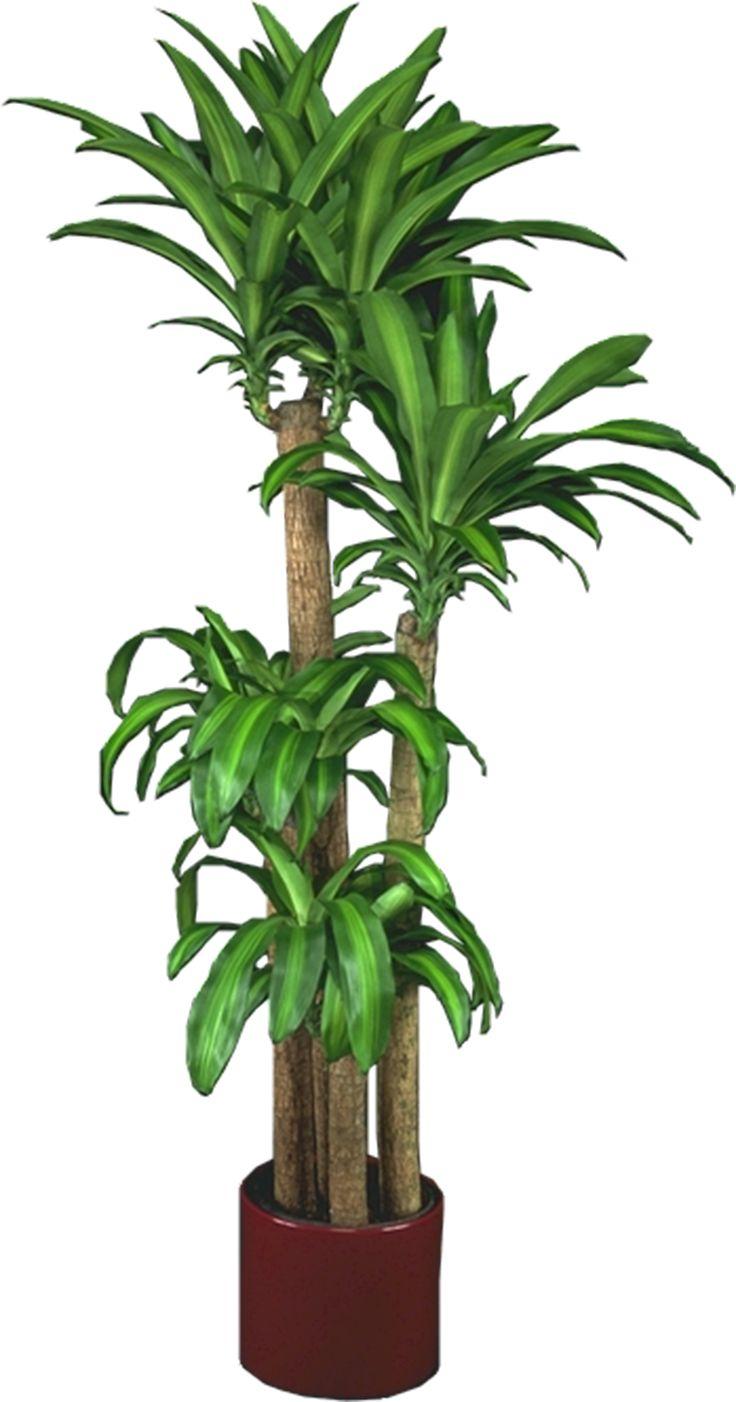 Low Light Plants Indoor Plants  House Plants  House