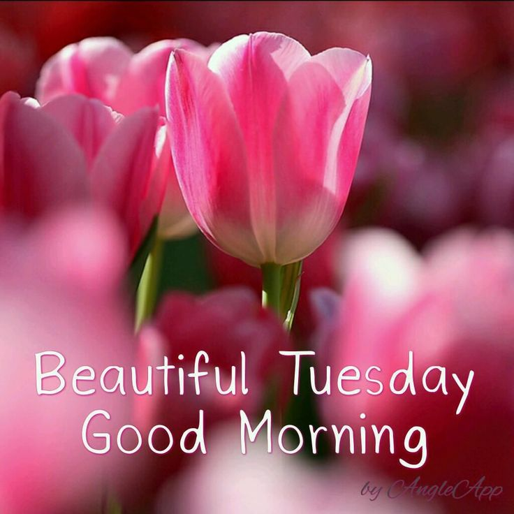 Beautiful Tuesday Good Morning