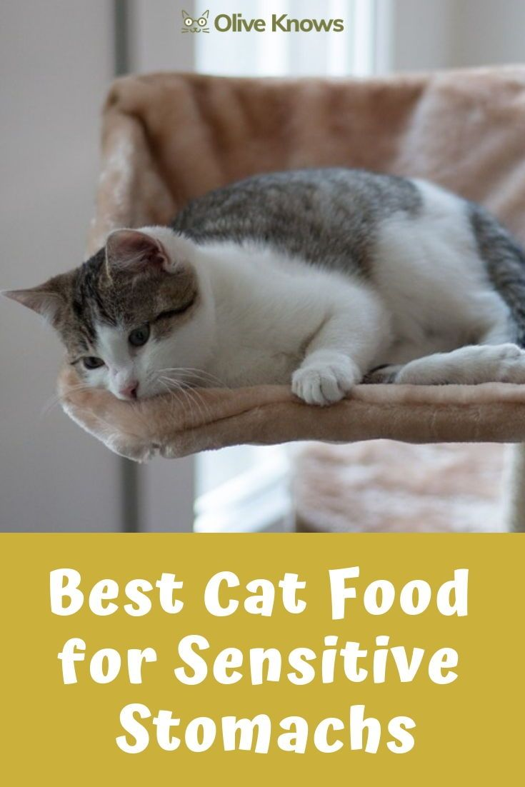 Best Cat Food For Sensitive Stomachs Your Cat Needs Oliveknows Best Cat Food Cat Food Sensitive Stomach Cat Food