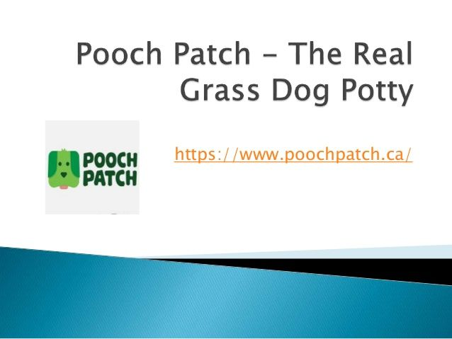 #Indoor #pee #pads https://www.slideshare.net/poochpatchca/how-artificial-grass-can-be-useful-for-dogs