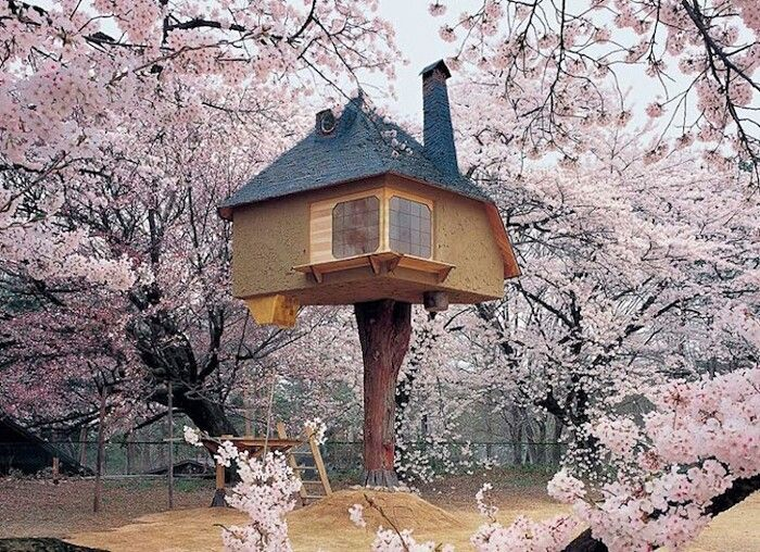 Una casa sull'albero, ma di design: 21 esempi tra i più belli