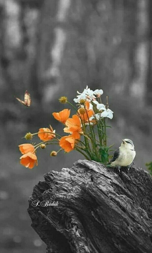 Bird Flowers Beautiful Nature Birds Beautiful Birds