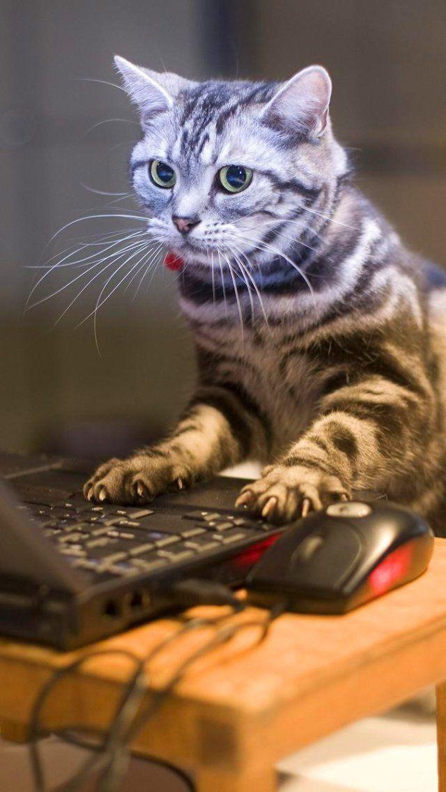 Gato engraçado 640 X 1136 V2