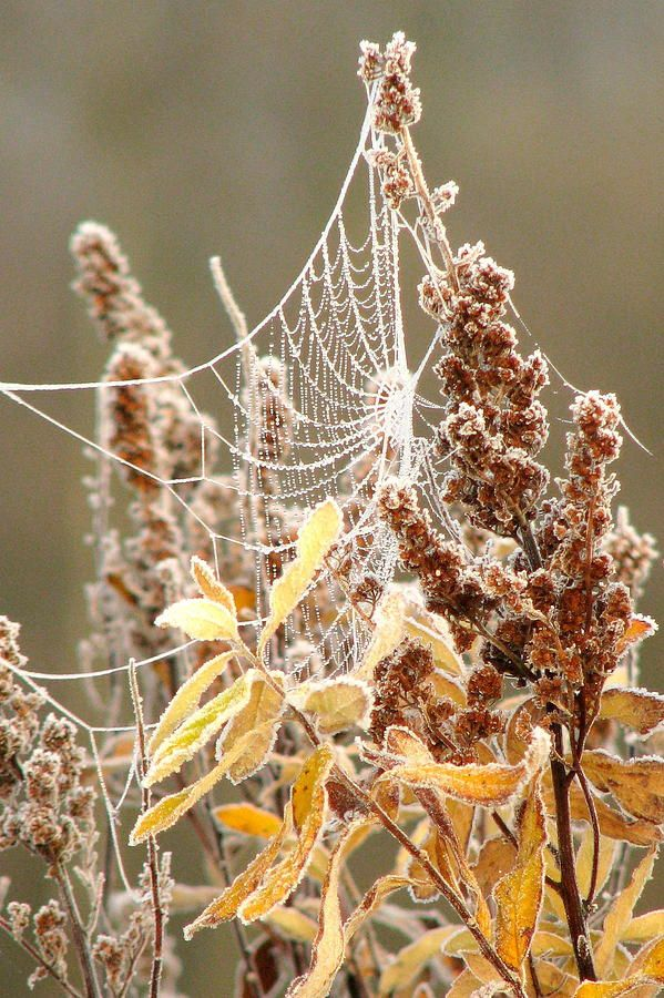 Image result for frosty mornings pinterest