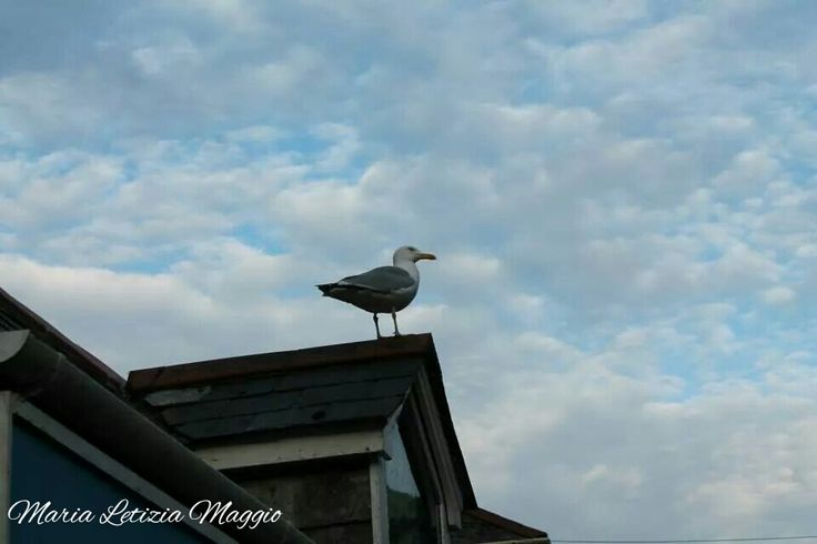 Seagull by Maria Letizia Maggio on 500px