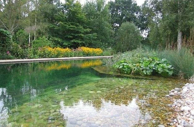 17 natural swimming pools you wish were in your backyard for Koi pond swimming pool
