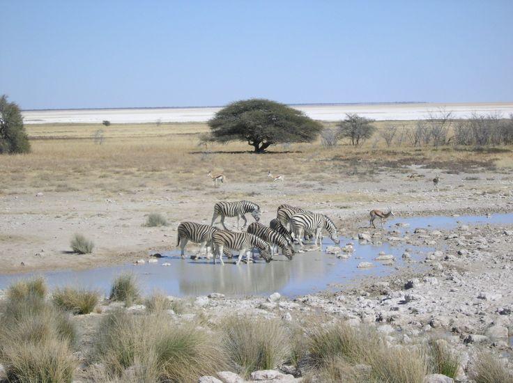immagini animali savana - Cerca con Google