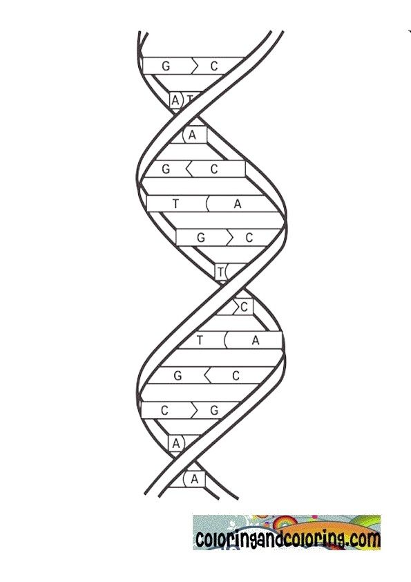 dna coloring   Coloring and coloring pages   Scienza, Scuola