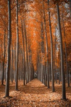 40936267 Título: Fotomural Bosque naranja
