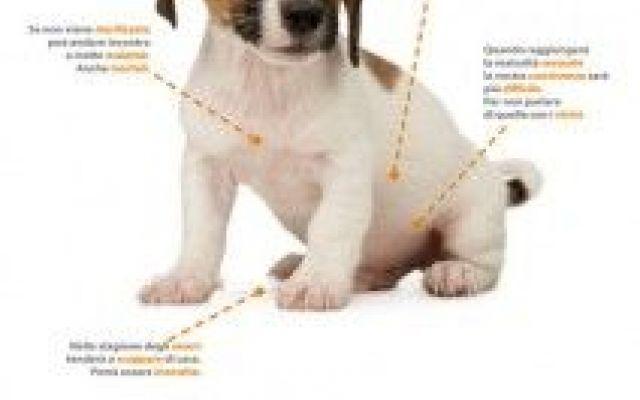 L'importanza della sterilizzazione #sterilizzare #cane