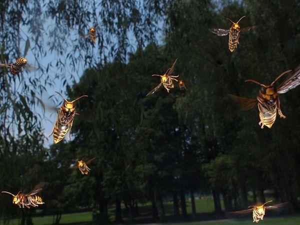 【閲覧注意】 ねらー集めて魚捕りしてたらマムシとかハチ捕れたから全部食ったったwwwwww - ゴールデンタイムズ