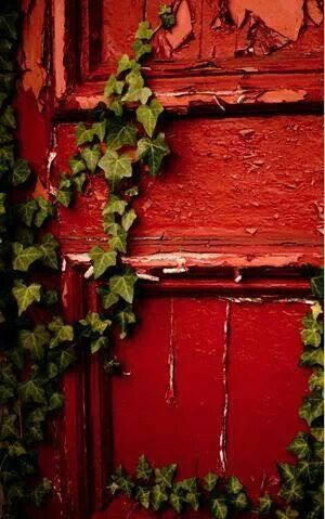 Red door climbed with ivy.