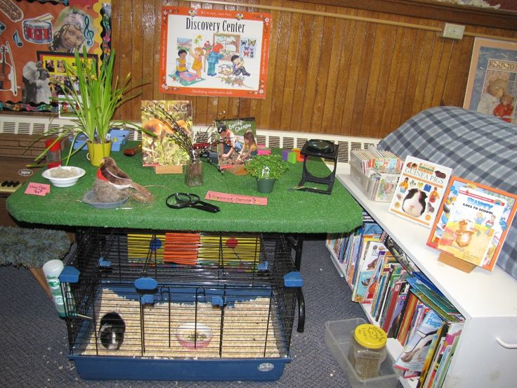 preschool science area ideas 17 best images about ece science centers on 630