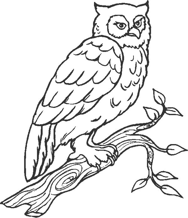 Owl Coloring Pages Owls Are A Group Of Birds That Belong To The Order Strigiformes