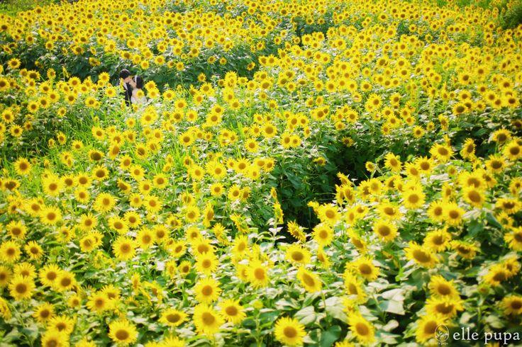 一面黄色な真夏のロケーションフォト* | *elle pupa blog*