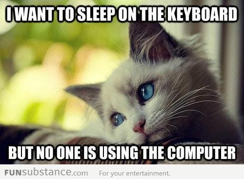 First world cat problems: Catproblem, Kitty Cat, Pet, Cat Problems, Blue Eye, Funny Stuff, So True, Even, Animal