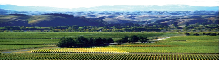 """""""One forgets just how fine New Zealand's Cabernet Sauvignon and Bordeaux blends can be, particularly in Hawke's Bay.."""" Neal Martin, Writer for Robert Parker's Wine Advocate, May 2008.    http://www.crazywebjuice.com/NZWineOnline"""