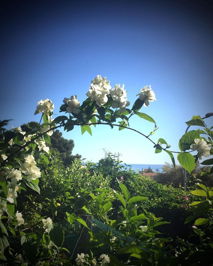 #beddamia #quantanostalgia #trinacria #alba #tramonto #inverno #cielo #nuvole #italian_places #igerssicilia #igerssiracusa #ig_sicily #ig_visitsicily #ig_sicilia #italy_photolovers #loves_sicilia #volgosicilia #sicily_tricolors #siciliabedda #ig_sicilians #italiainunoscatto #sicilianjourney #kings_sicilia #italy_vacations #visititaly #visititalia #top_italia_photo #likes_sicilia #photooftheday #new_photoitalia