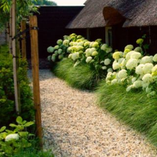 Another picture of a hydrangea border, here underplanted with grasses.